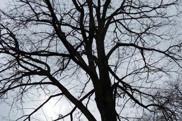 The Bald Tree